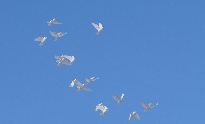 Голубь в голубом небе фото захарова