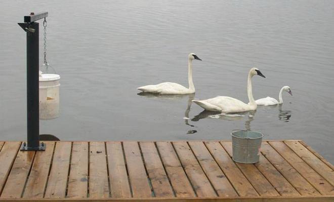 Кормушка для лебедей