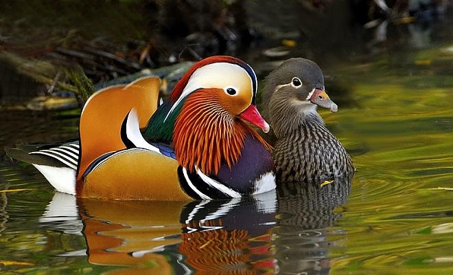 Моногамная пара птиц