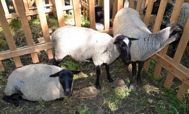 Летняя овчарня