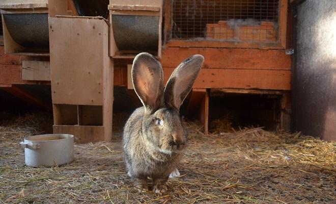 Дружелюбный кролик