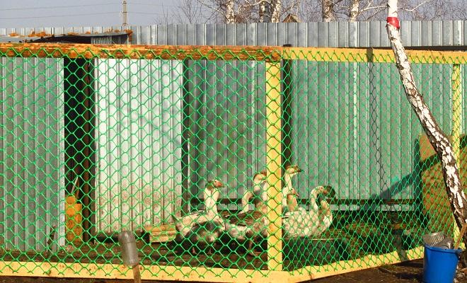 Загон для гусей