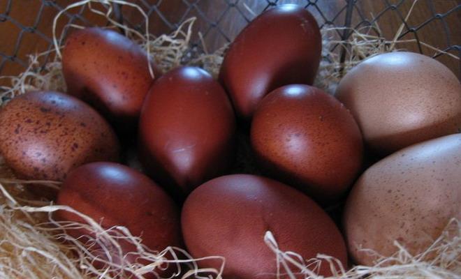Яйца кур породы маран